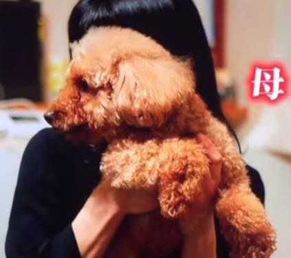 横浜流星 母 犬